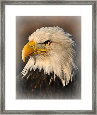 Misty Eagle Framed Print by Marty Koch