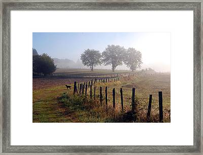Misty Morning Framed Print by Jeff Lewis