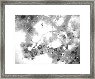 Misty Morning Framed Print by Kimberley Bennett