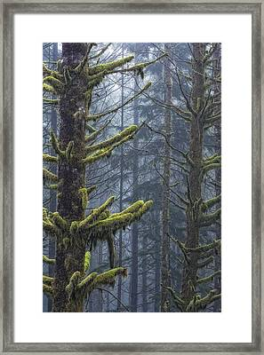 Misty Mystical Moss Forest Framed Print by Paul W Sharpe Aka Wizard of Wonders