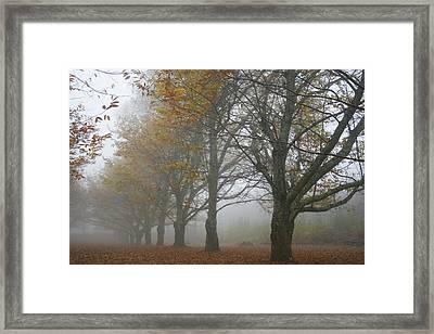 Misty November Framed Print