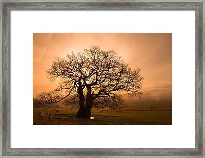 Misty Oak Framed Print by Kris Dutson