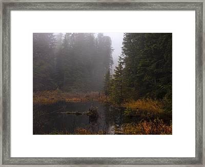 Misty Solitude Framed Print by Mike Reid