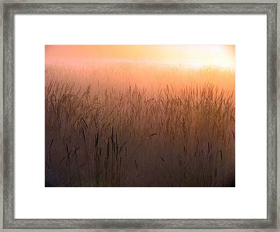 Framed Print featuring the photograph Misty Sunrise by I'ina Van Lawick