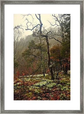 Misty Tree Framed Print by Marty Koch