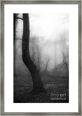 Misty Twist Framed Print