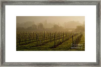 Misty Vines Framed Print by Urban Shooters