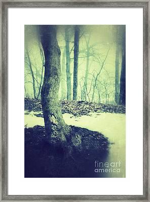 Misty Winter Woods Framed Print by Jill Battaglia