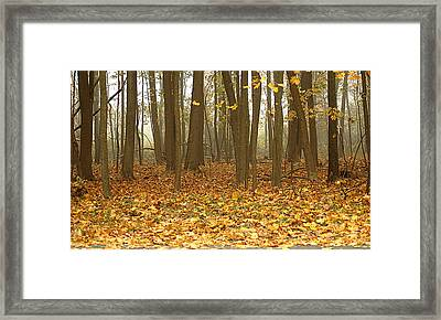Misty Wood Framed Print by Cathy Kovarik