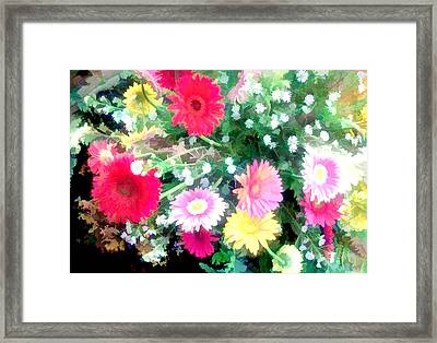 Mixed Asters Framed Print by Elaine Plesser