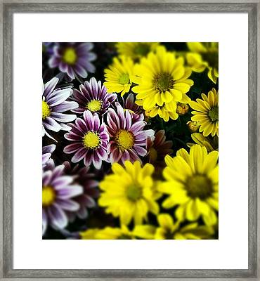 Mixed Beauty Framed Print by Chasity Johnson