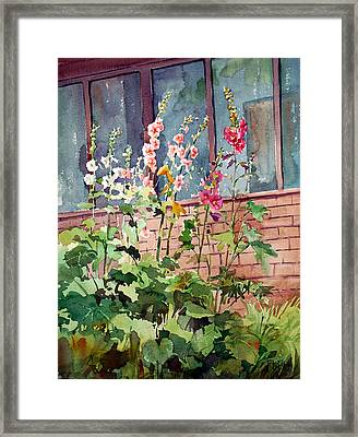 Mixed Hollyhock Framed Print by Peter Sit