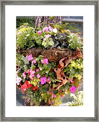 Mixed Impatiens In Driftwood Hanging Basket Framed Print by Elaine Plesser