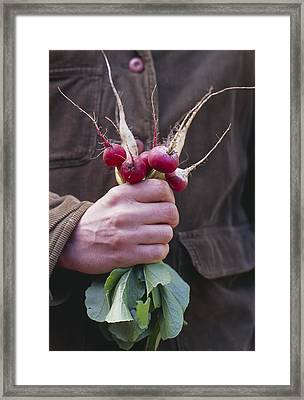 Mixed Organic Radishes Framed Print