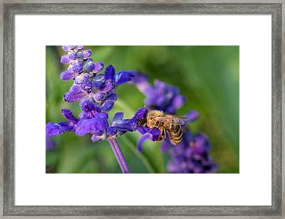Framed Print featuring the photograph Mmmm Honey by Tom Gort