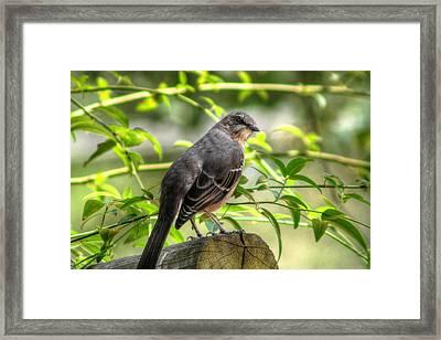 Mocking Bird Framed Print by Ester  Rogers
