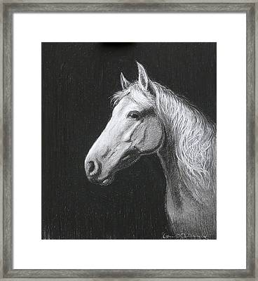Mollie Framed Print by Tomas OMaoldomhnaigh