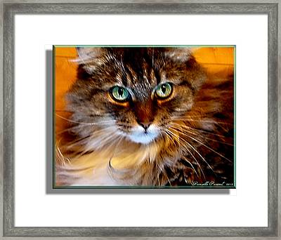 Molly Framed Print by Danielle  Parent