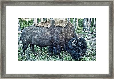 Molting Bison In Yellowstone Framed Print by Gregory Dyer