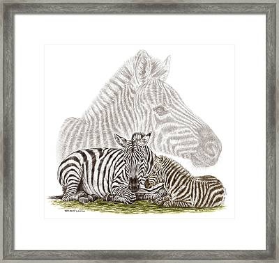 Framed Print featuring the drawing Mom And Baby Zebra Art by Kelli Swan