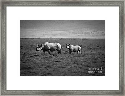 Mom And Child Black Rhinos Framed Print by Darcy Michaelchuk