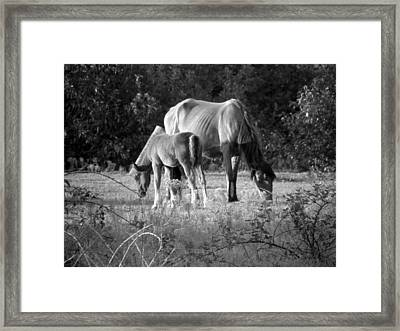 Mom And Foal Grazing At Sunset Framed Print by Kim Galluzzo Wozniak