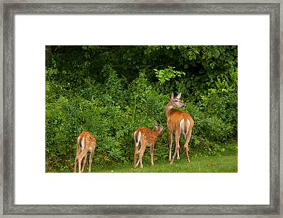Mom And Two Framed Print by Karol Livote