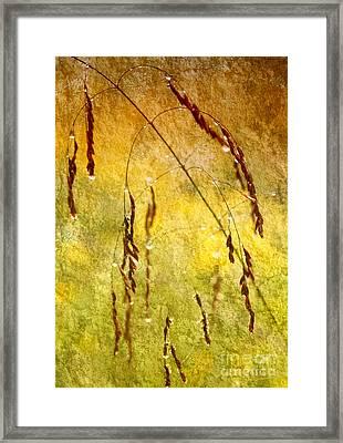 Momentary Wetness II Framed Print by Dan Carmichael