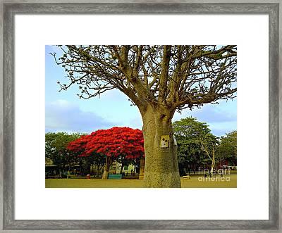 Moments And Tree Framed Print by Fania Simon