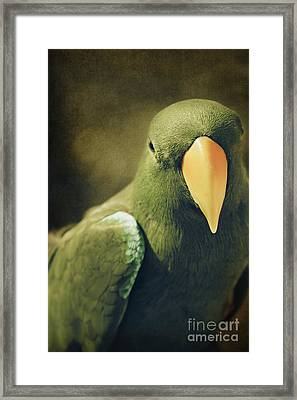 Moments Like These Framed Print by Sharon Mau