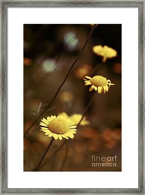 Momentum 03a Framed Print by Variance Collections