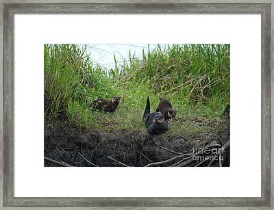 Mommas Boys Framed Print by Jack Norton