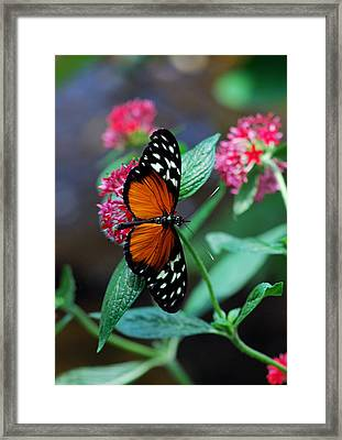 Monarch Butterfly Framed Print by Luis Esteves