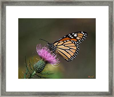 Framed Print featuring the photograph Monarch Butterfly On Thistle 13a by Gerry Gantt