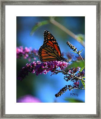 Framed Print featuring the photograph Monarch Butterfly by Patrick Witz
