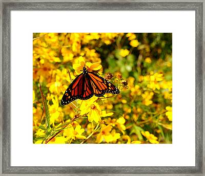 Monarch Butterfly Framed Print by Frozen in Time Fine Art Photography