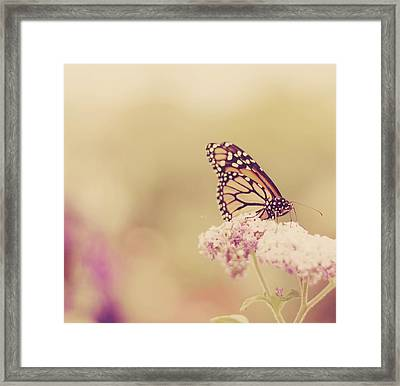 Monarch Butterfly With Bokeh Framed Print by Kristy Campbell