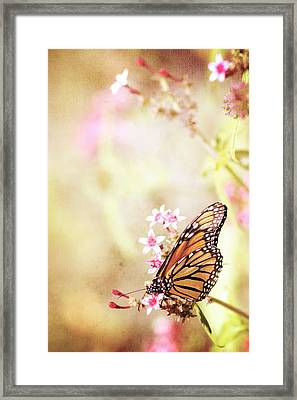 Monarch Canvas Framed Print by Joel Olives