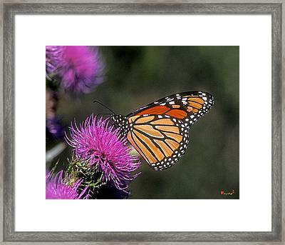 Monarch On Thistle 13f Framed Print by Gerry Gantt
