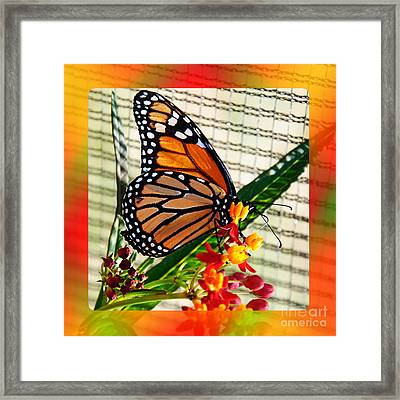 Monarch Rainbow Framed Print by Andee Design