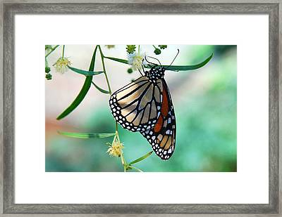 Framed Print featuring the photograph Monarch by Tam Ryan