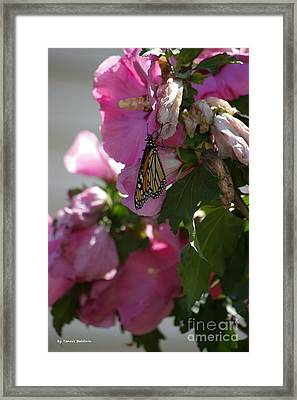 Framed Print featuring the photograph Monarch by Tannis  Baldwin