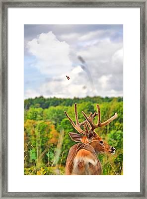 Monarch Velvet Framed Print