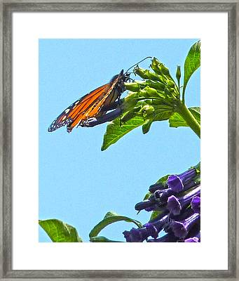 Monarch With Purple Flower Framed Print