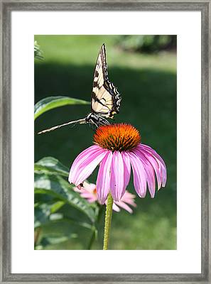 Monarch's Kingdom Framed Print by Devon Stewart