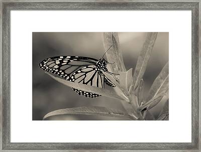 Monarchy Is Color Blind Framed Print by DigiArt Diaries by Vicky B Fuller