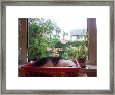 Monday Catnap Framed Print by Judith Desrosiers