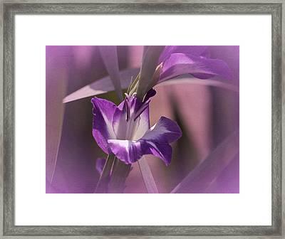 Monday's Gladiola No. 2 Framed Print by Richard Cummings