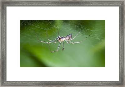 Money Spider Framed Print