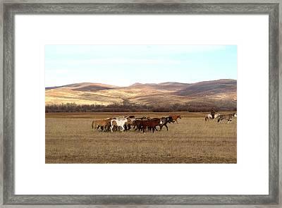 Mongolian Horses Framed Print